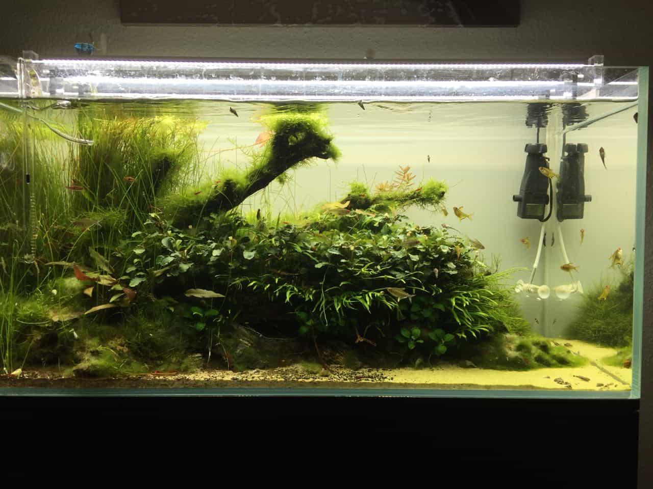 182 Vom Aquascape zum Biotop Aquarium (Dennis Laufer) 9