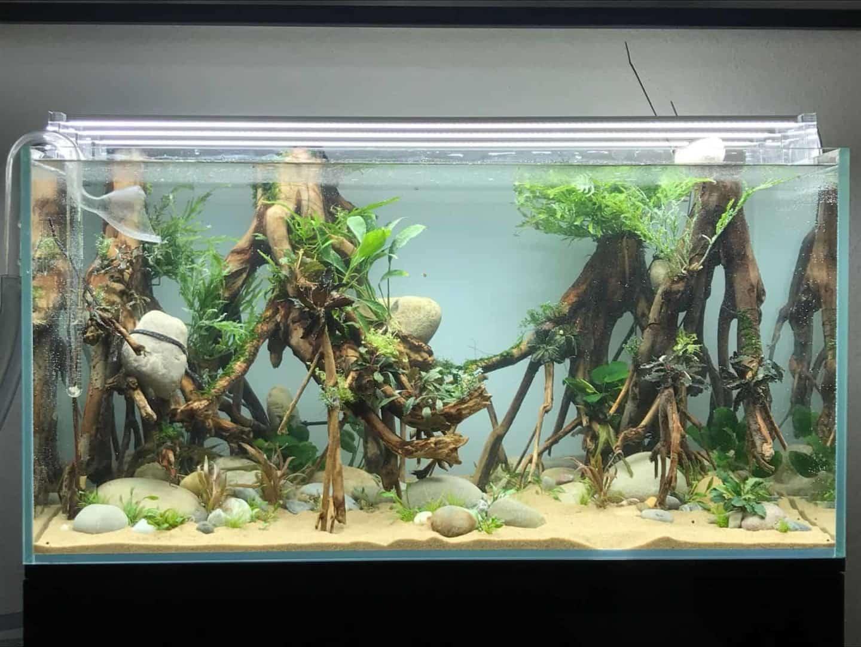 182 Vom Aquascape zum Biotop Aquarium (Dennis Laufer) 18