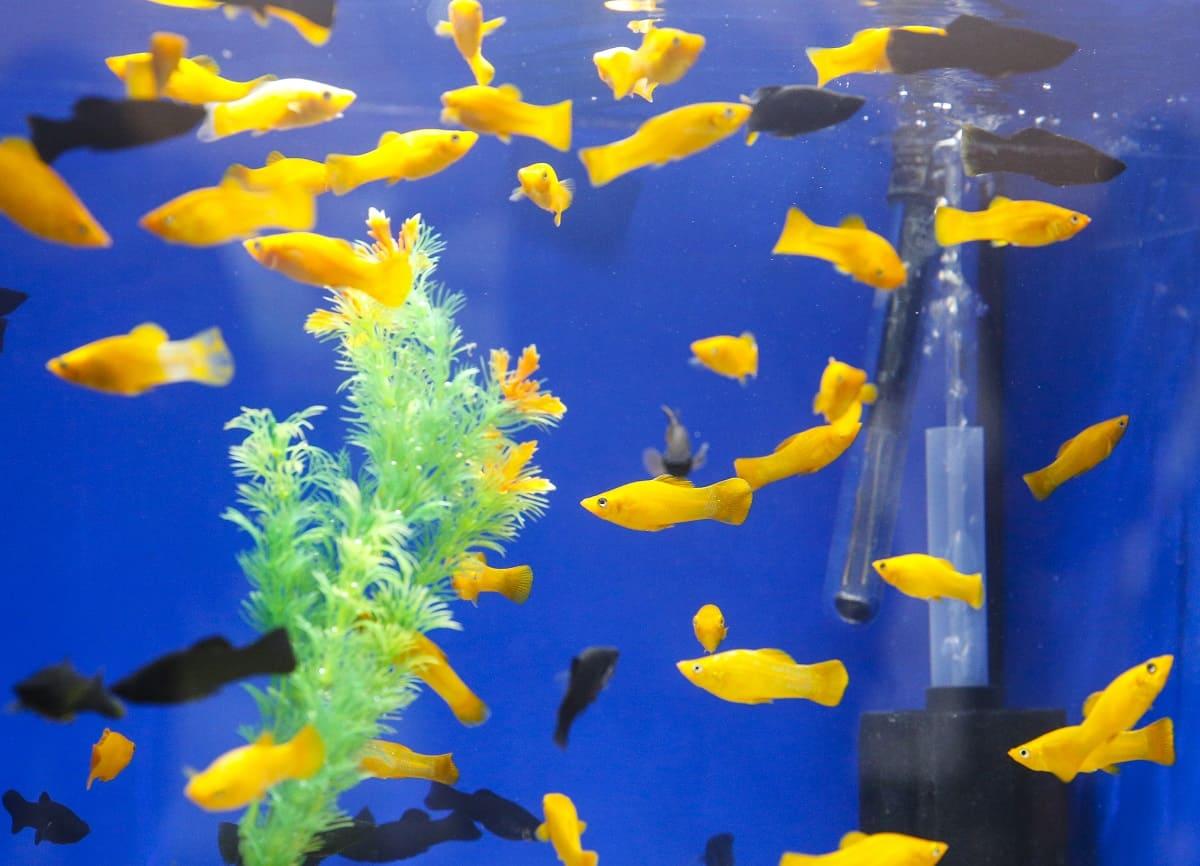 Aquaristik – ein Hobby für drinnen und draußen 2