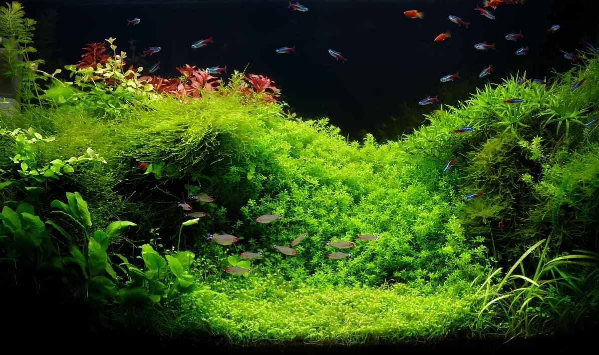 Aquascaping - Faszinierende Unterwassergärten für zu Hause 1