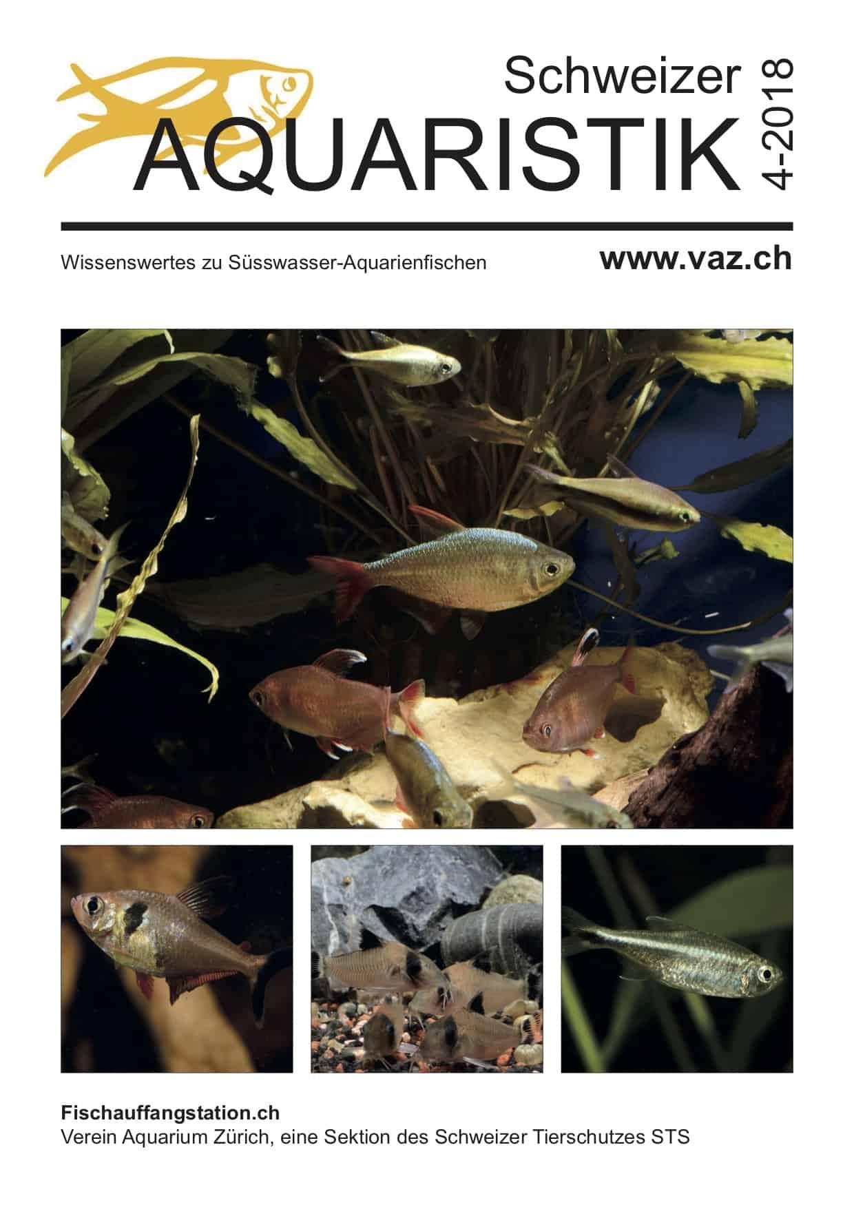 VAZ Ausgabe 4 / 2018 - kostenloses Magazin zum Download 1