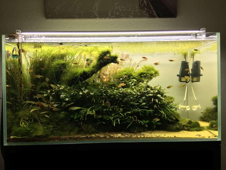 182 Vom Aquascape zum Biotop Aquarium (Dennis Laufer) 12