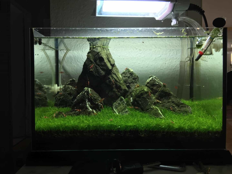 182 Vom Aquascape zum Biotop Aquarium (Dennis Laufer) 8