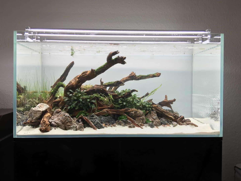 182 Vom Aquascape zum Biotop Aquarium (Dennis Laufer) 14