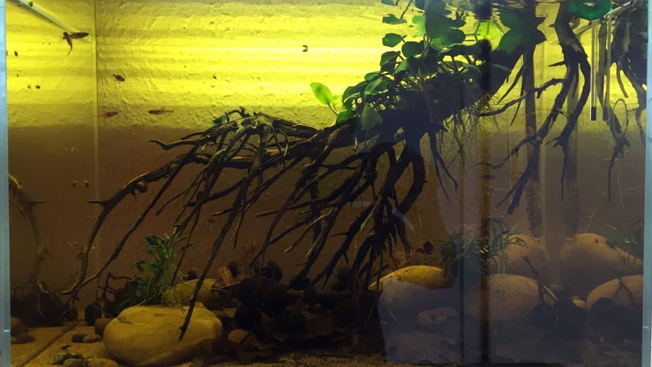 182 Vom Aquascape zum Biotop Aquarium (Dennis Laufer) 5