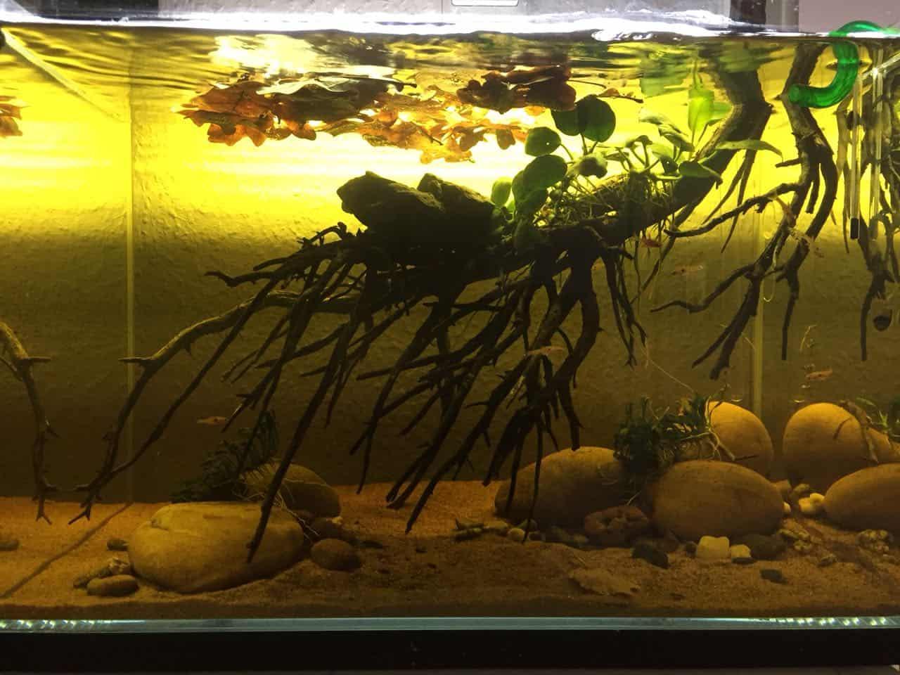 182 Vom Aquascape zum Biotop Aquarium (Dennis Laufer) 7