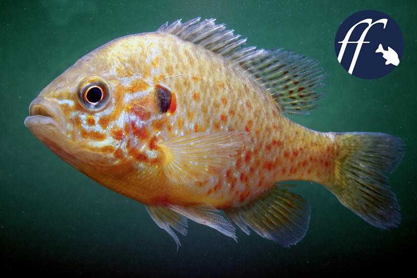 Franky Friday: Bio-Invasoren – sind die Aquarianer verantwortlich? 1
