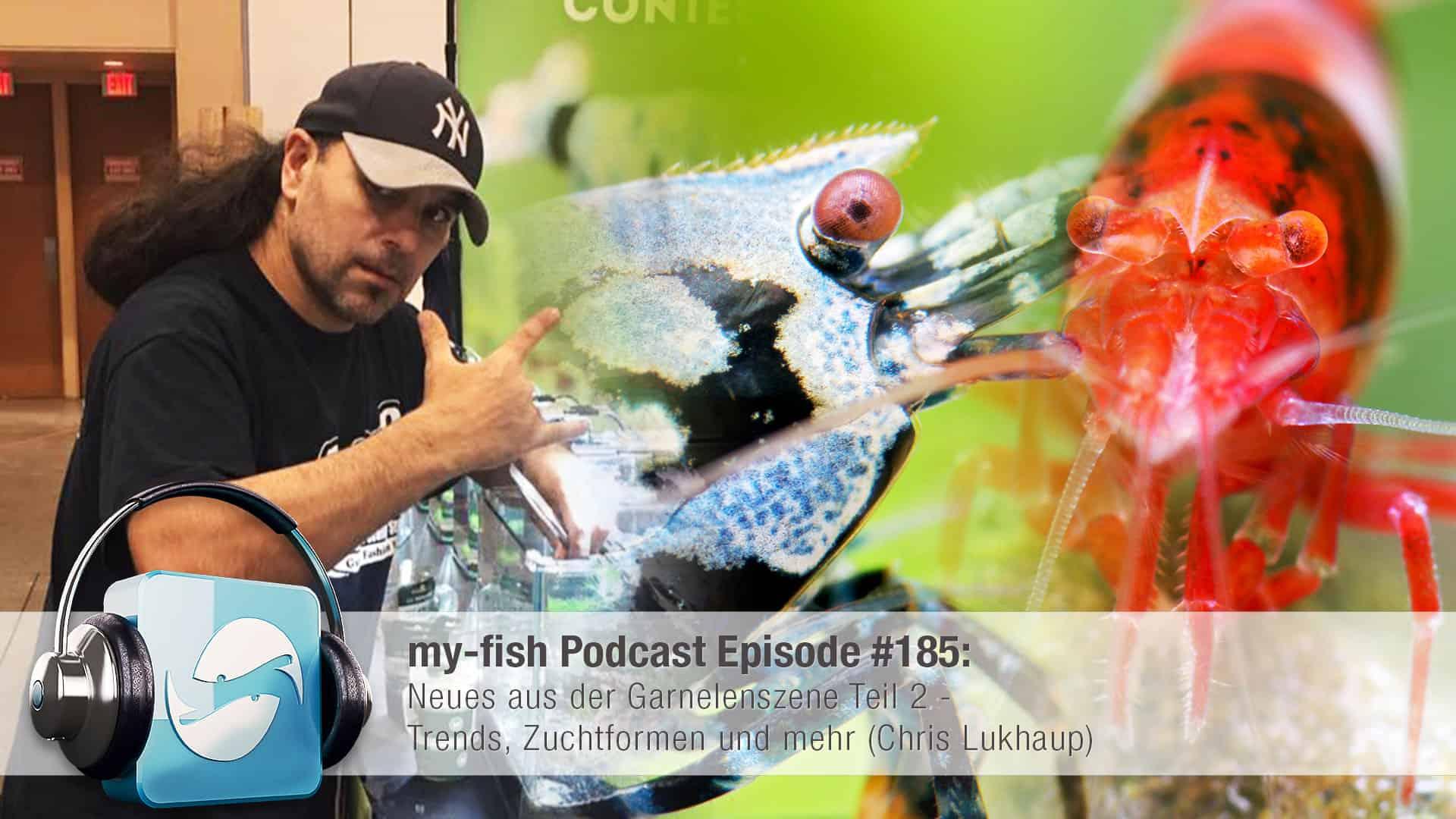 Podcast Episode #185: Neues aus der Garnelenszene Teil 2 - Trends, Zuchtformen und mehr (Chris Lukhaup) 1