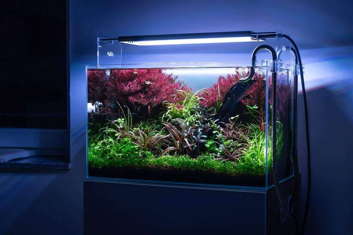 186 LED Aquarienbeleuchtung: Alle Details und Fakten zur Technik Teil 1 (Moritz Stapelfeld) 7