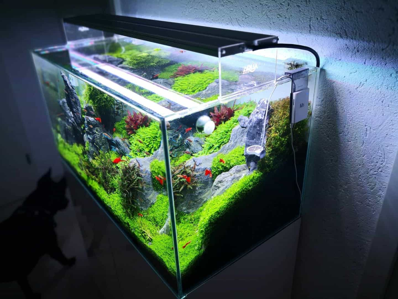 186 LED Aquarienbeleuchtung: Alle Details und Fakten zur Technik Teil 1 (Moritz Stapelfeld) 3