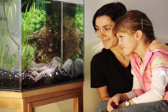 Synchronschwimmer für das Wohnzimmer: Schwarmfische beleben das Aquarium 1
