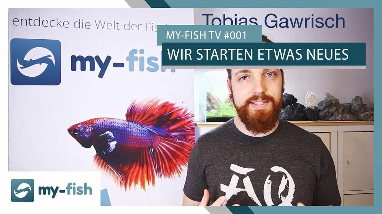 my-fish TV Episode 1