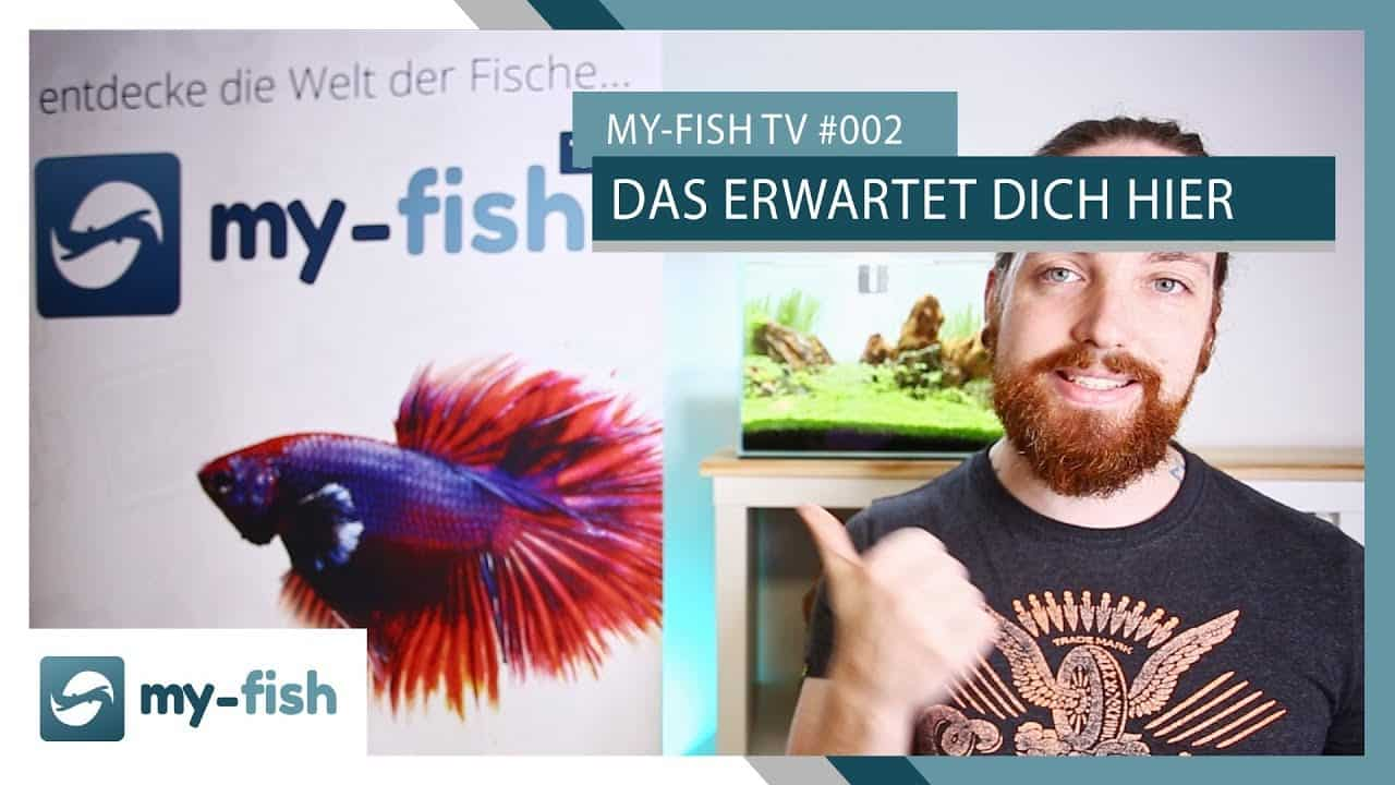 my-fish TV Episode 002