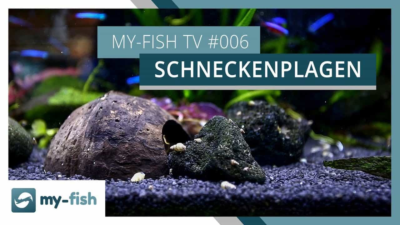 my-fish TV Episode 6