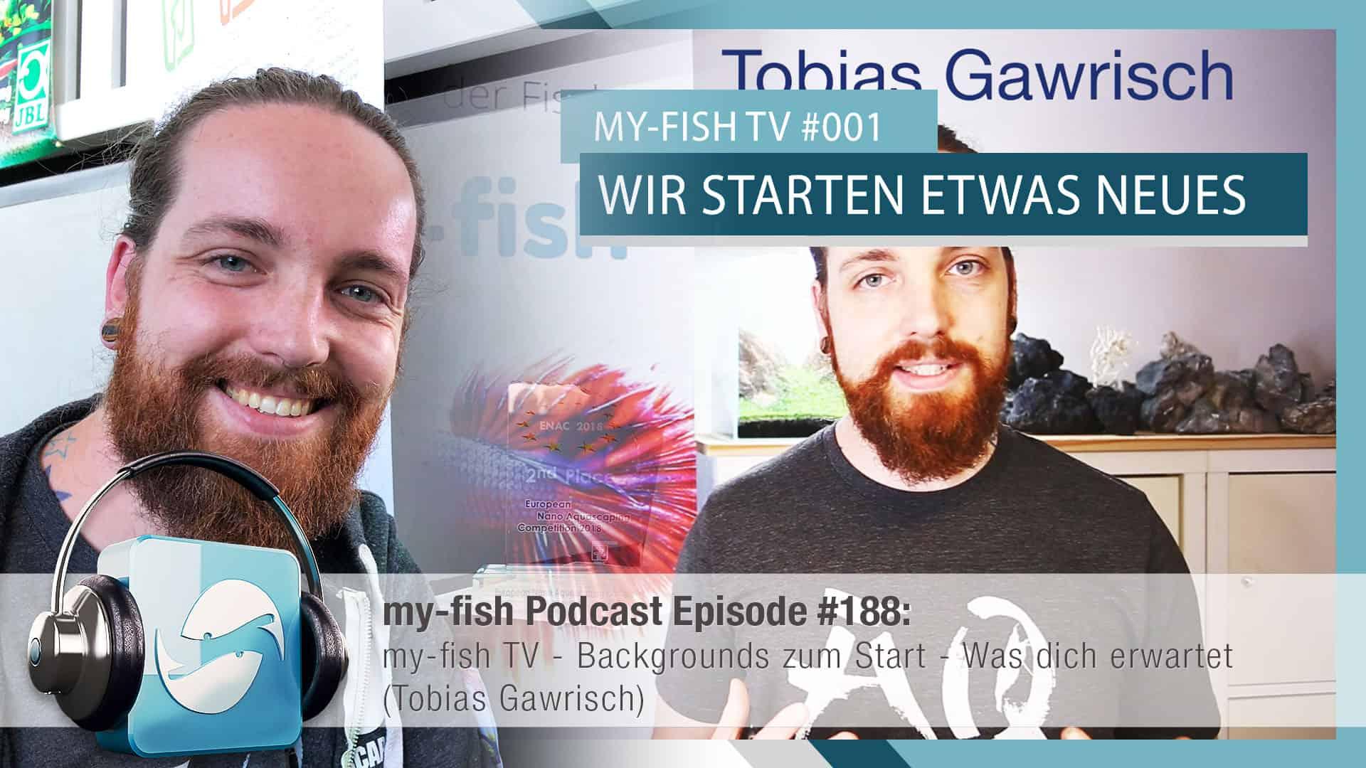 188 my-fish TV - Backgrounds zum Start (Tobias Gawrisch) 1