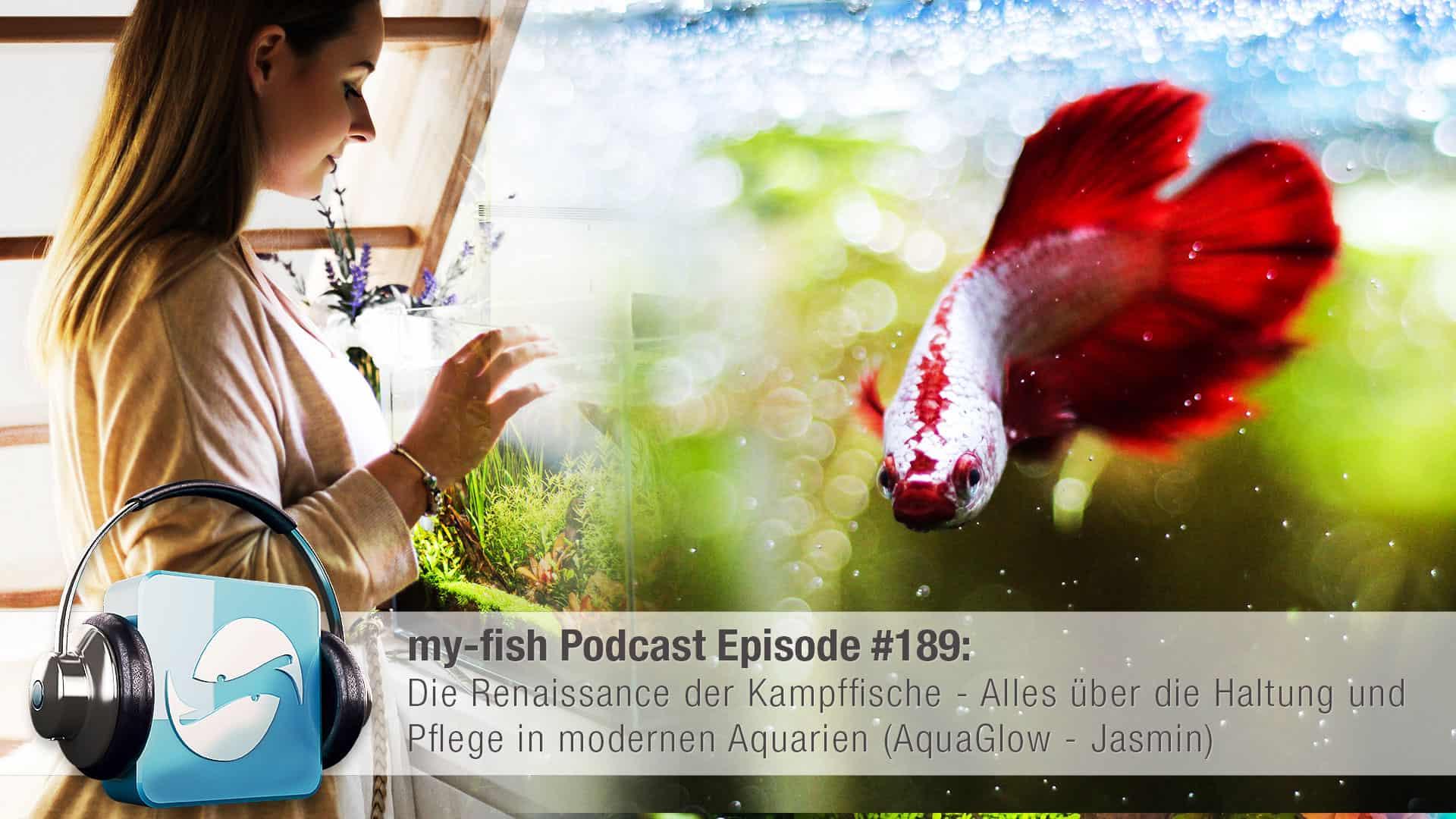Podcast Episode #189: Die Renaissance der Kampffische - Alles über die Haltung und Pflege in modernen Aquarien (AquaGlow - Jasmin) 1