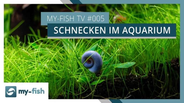 my-fish TV Episode 5