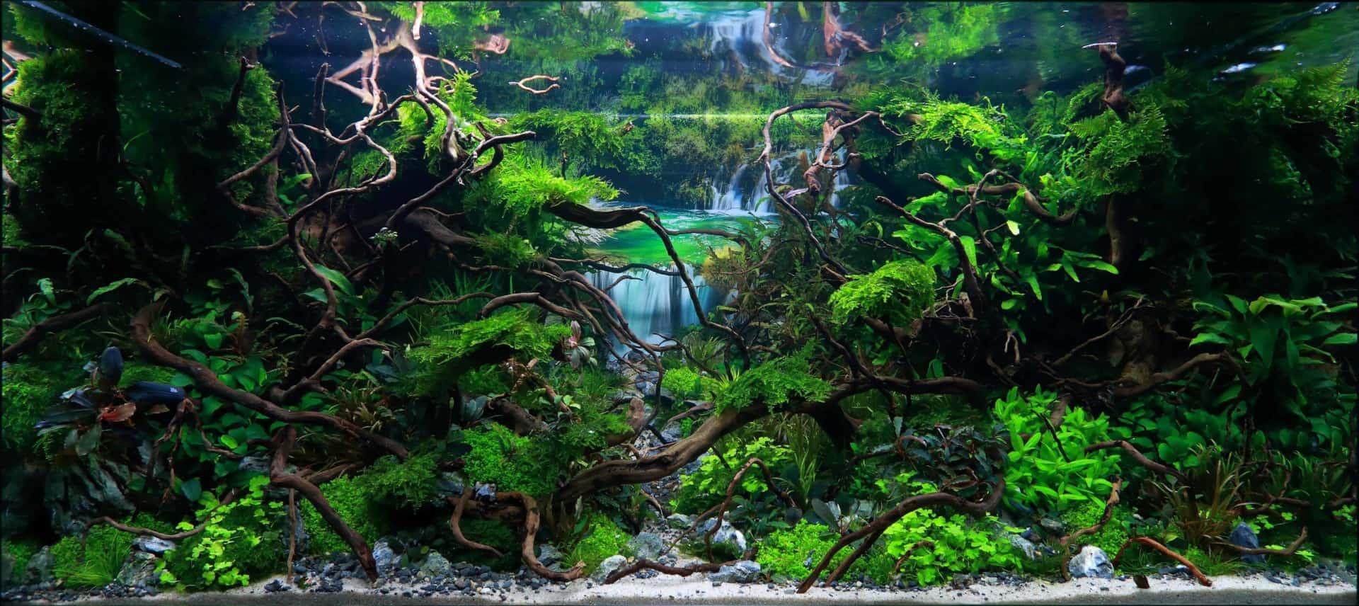 191 - The Art of the Planted Aquarium - Neuheiten und Möglichkeiten zum Mitmachen im April 2019 (Stefanie Hesse) 4