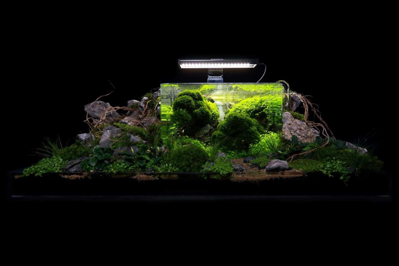 191 - The Art of the Planted Aquarium - Neuheiten und Möglichkeiten zum Mitmachen im April 2019 (Stefanie Hesse) 12