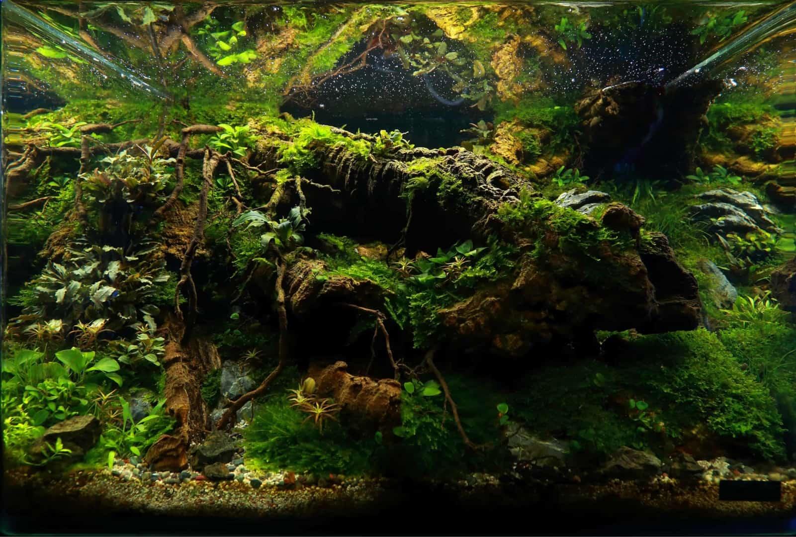 191 - The Art of the Planted Aquarium - Neuheiten und Möglichkeiten zum Mitmachen im April 2019 (Stefanie Hesse) 14