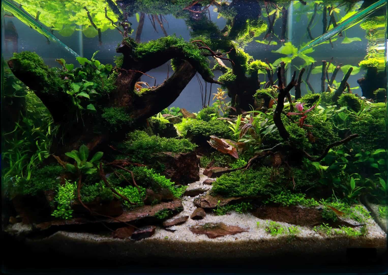 191 - The Art of the Planted Aquarium - Neuheiten und Möglichkeiten zum Mitmachen im April 2019 (Stefanie Hesse) 15
