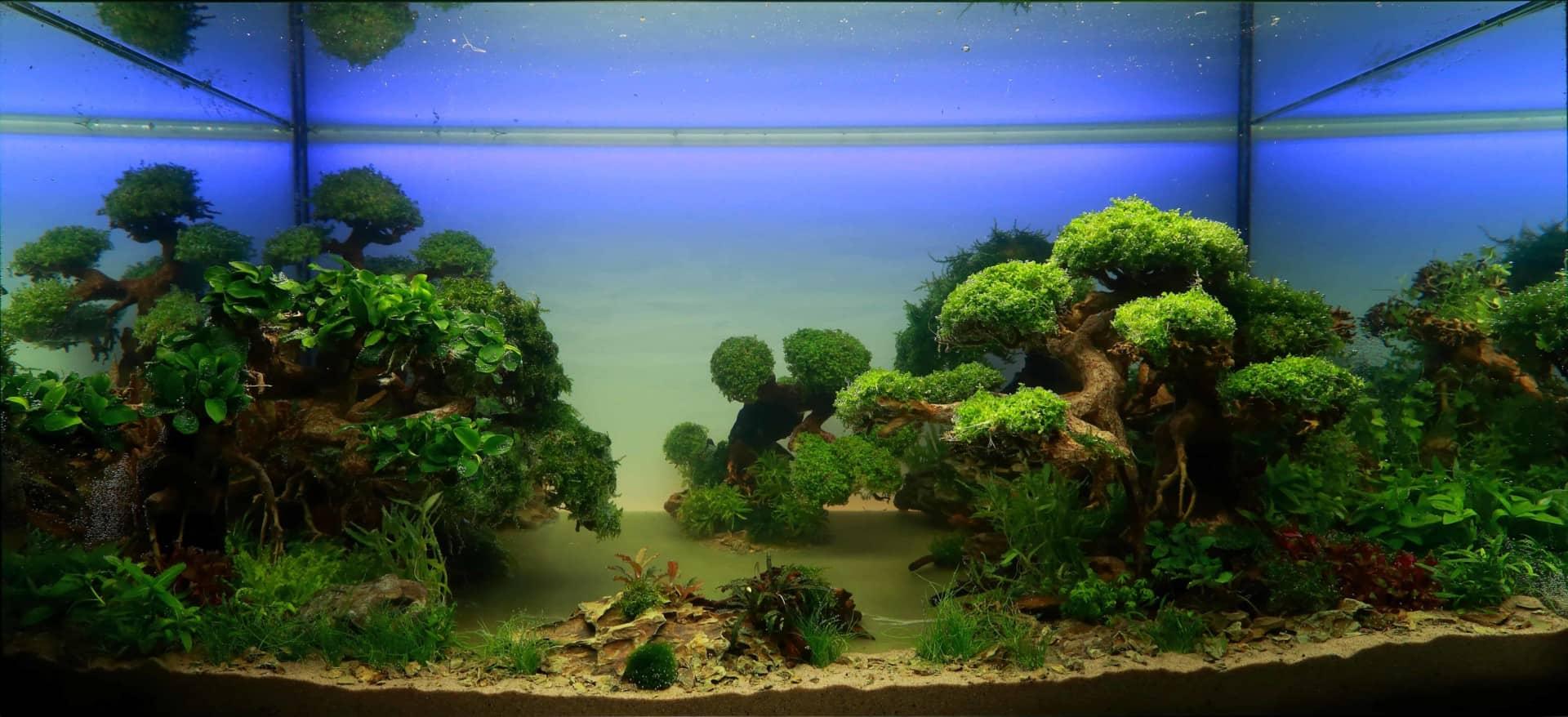191 - The Art of the Planted Aquarium - Neuheiten und Möglichkeiten zum Mitmachen im April 2019 (Stefanie Hesse) 10