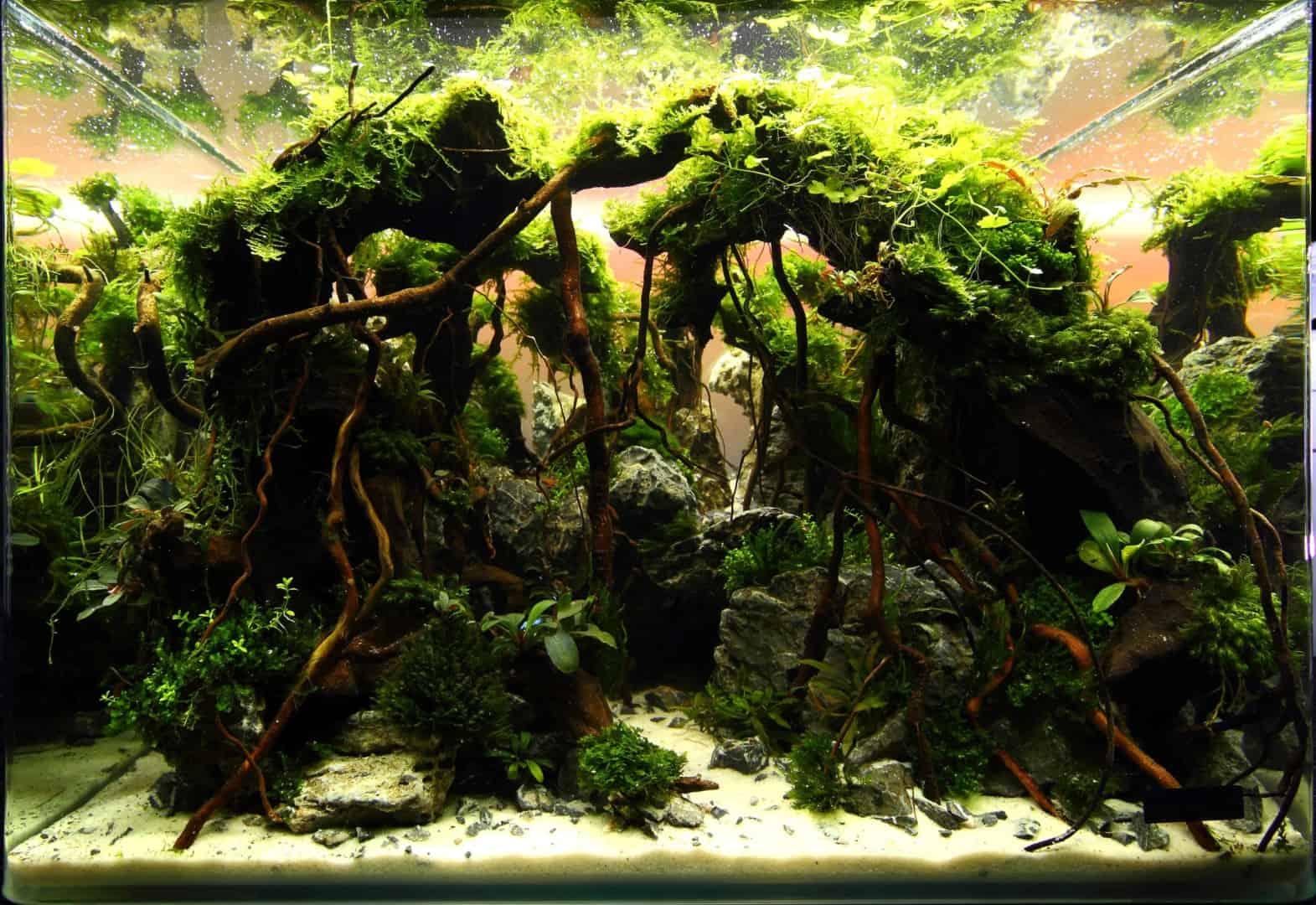 191 - The Art of the Planted Aquarium - Neuheiten und Möglichkeiten zum Mitmachen im April 2019 (Stefanie Hesse) 23