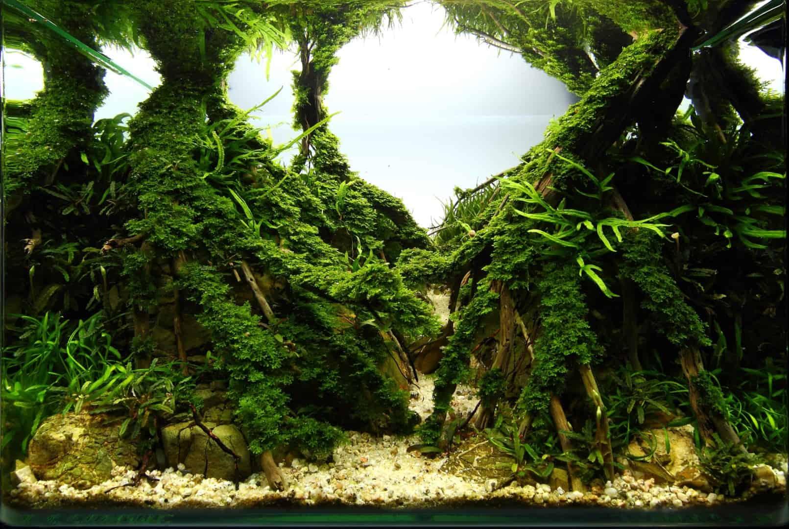 191 - The Art of the Planted Aquarium - Neuheiten und Möglichkeiten zum Mitmachen im April 2019 (Stefanie Hesse) 24