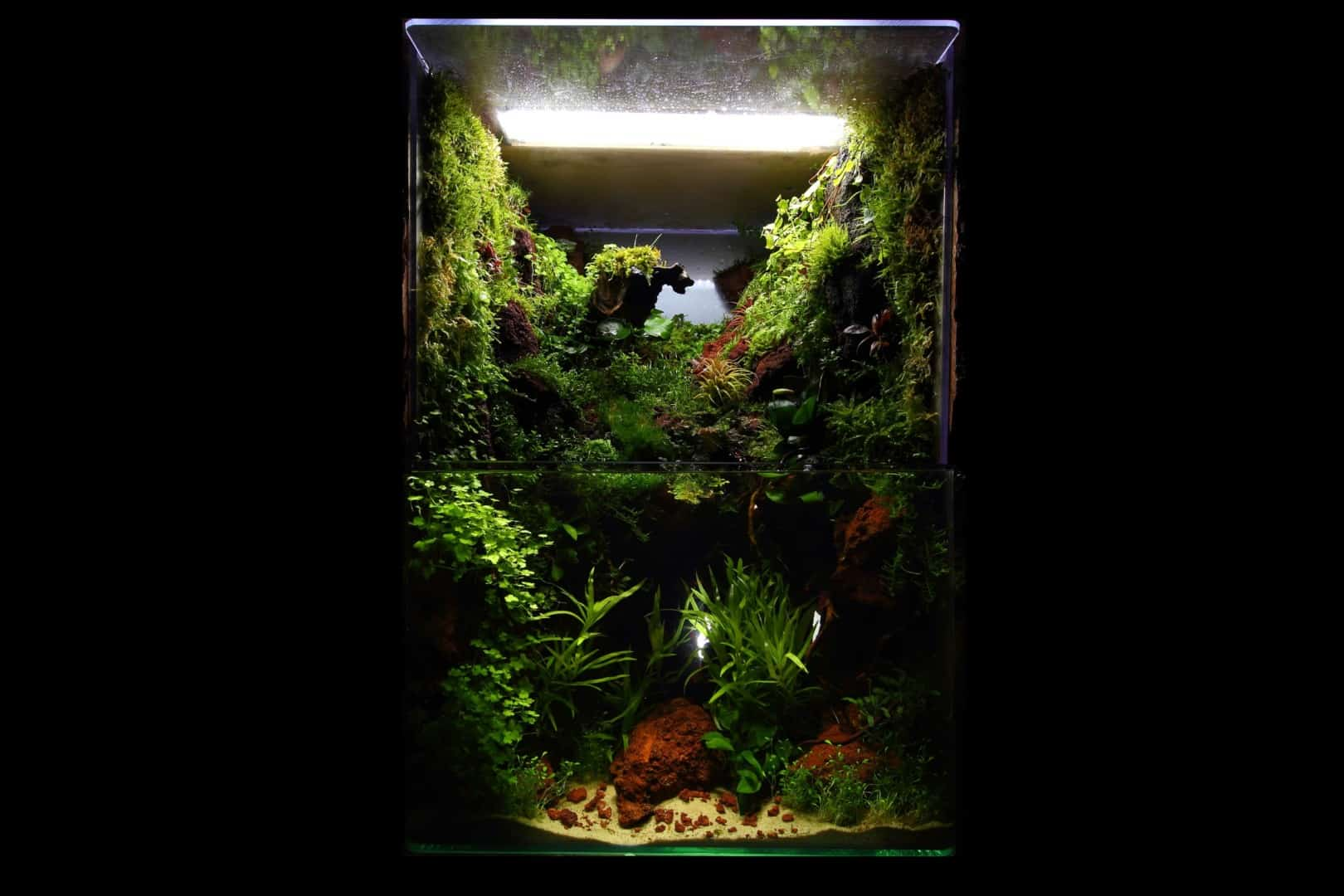 191 - The Art of the Planted Aquarium - Neuheiten und Möglichkeiten zum Mitmachen im April 2019 (Stefanie Hesse) 22