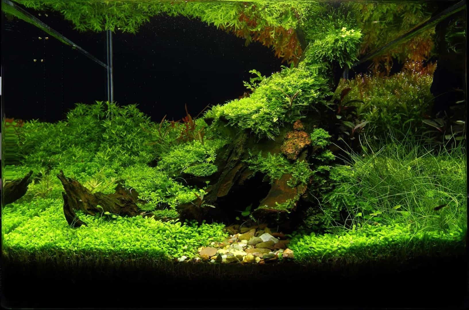 191 - The Art of the Planted Aquarium - Neuheiten und Möglichkeiten zum Mitmachen im April 2019 (Stefanie Hesse) 25