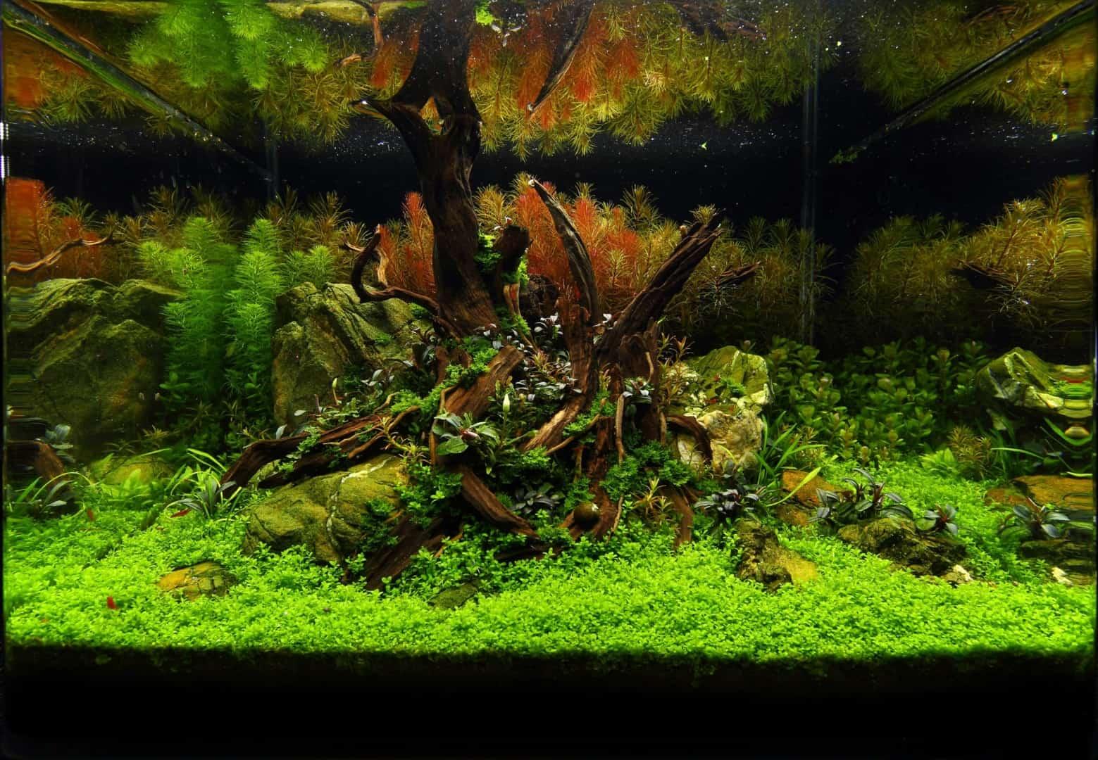 191 - The Art of the Planted Aquarium - Neuheiten und Möglichkeiten zum Mitmachen im April 2019 (Stefanie Hesse) 26
