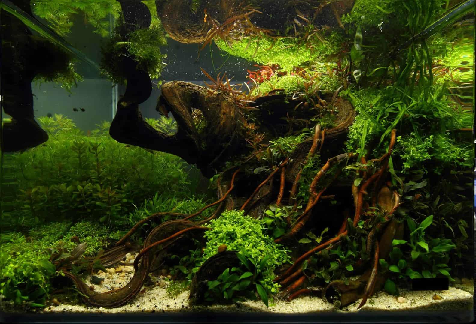 191 - The Art of the Planted Aquarium - Neuheiten und Möglichkeiten zum Mitmachen im April 2019 (Stefanie Hesse) 31