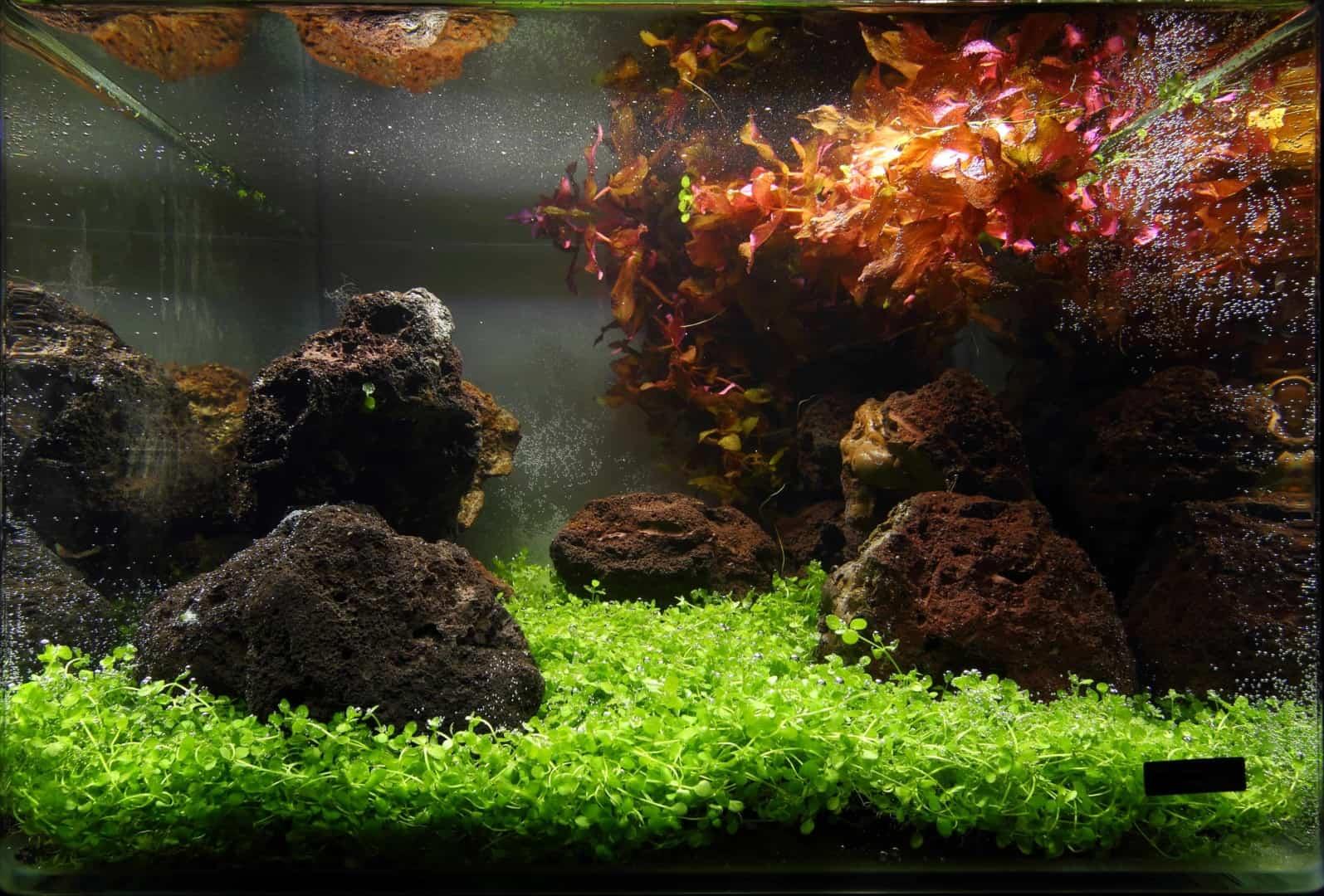 191 - The Art of the Planted Aquarium - Neuheiten und Möglichkeiten zum Mitmachen im April 2019 (Stefanie Hesse) 32