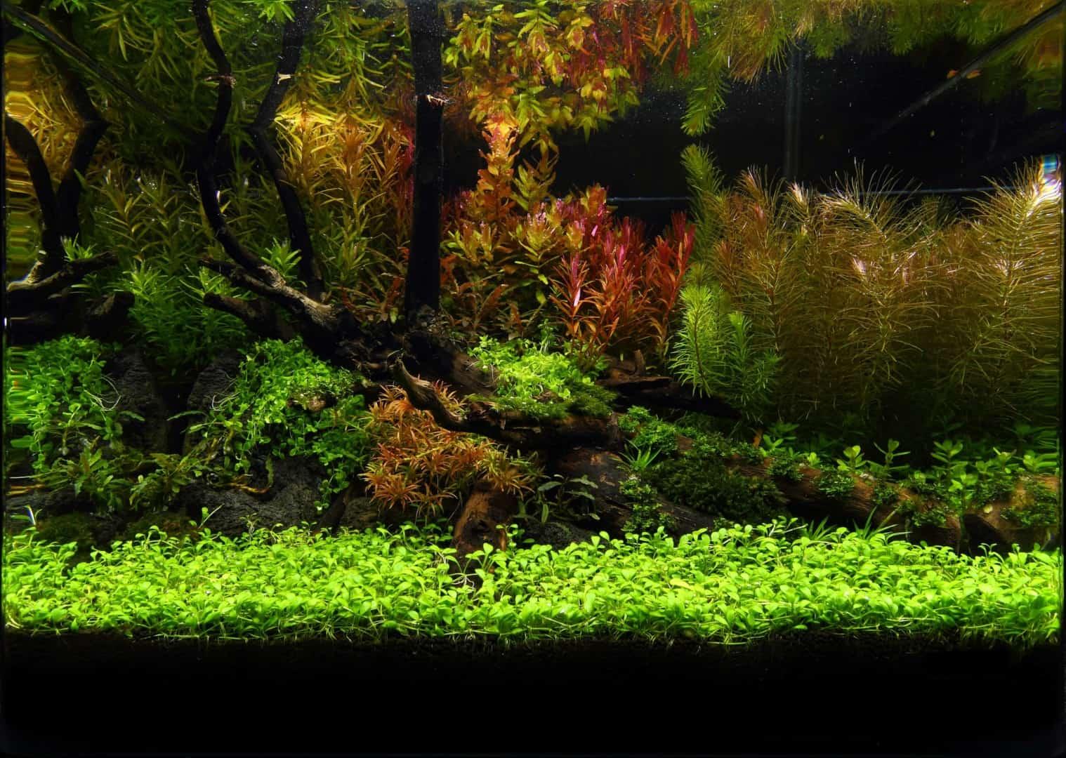 191 - The Art of the Planted Aquarium - Neuheiten und Möglichkeiten zum Mitmachen im April 2019 (Stefanie Hesse) 35