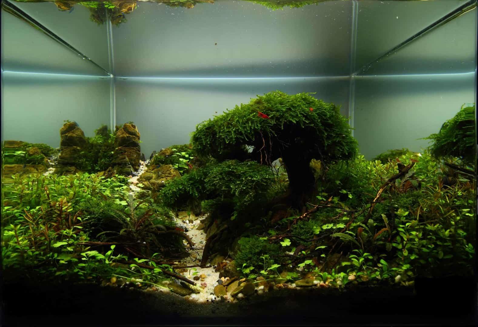 191 - The Art of the Planted Aquarium - Neuheiten und Möglichkeiten zum Mitmachen im April 2019 (Stefanie Hesse) 34