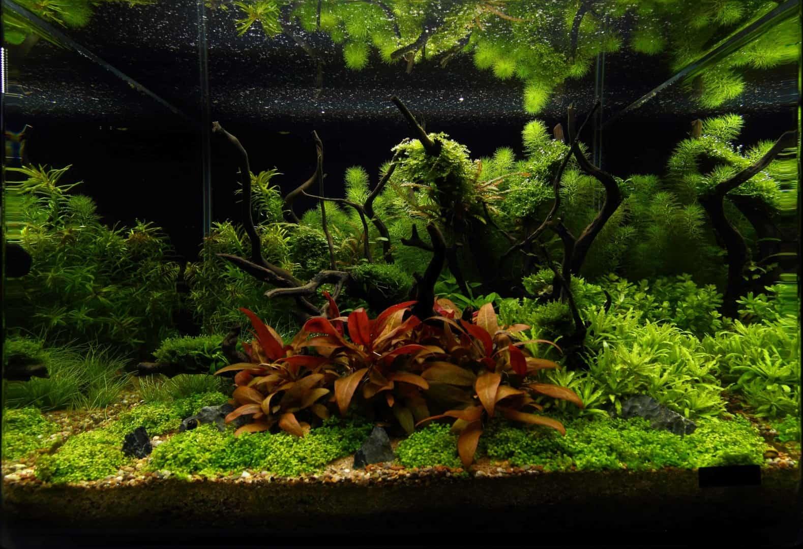 191 - The Art of the Planted Aquarium - Neuheiten und Möglichkeiten zum Mitmachen im April 2019 (Stefanie Hesse) 33