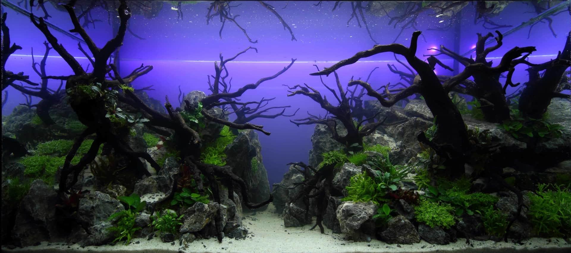 191 - The Art of the Planted Aquarium - Neuheiten und Möglichkeiten zum Mitmachen im April 2019 (Stefanie Hesse) 38