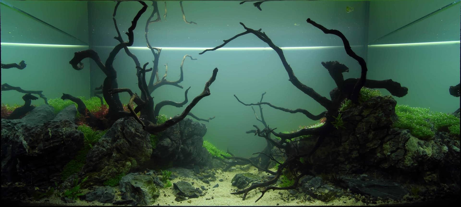 191 - The Art of the Planted Aquarium - Neuheiten und Möglichkeiten zum Mitmachen im April 2019 (Stefanie Hesse) 37
