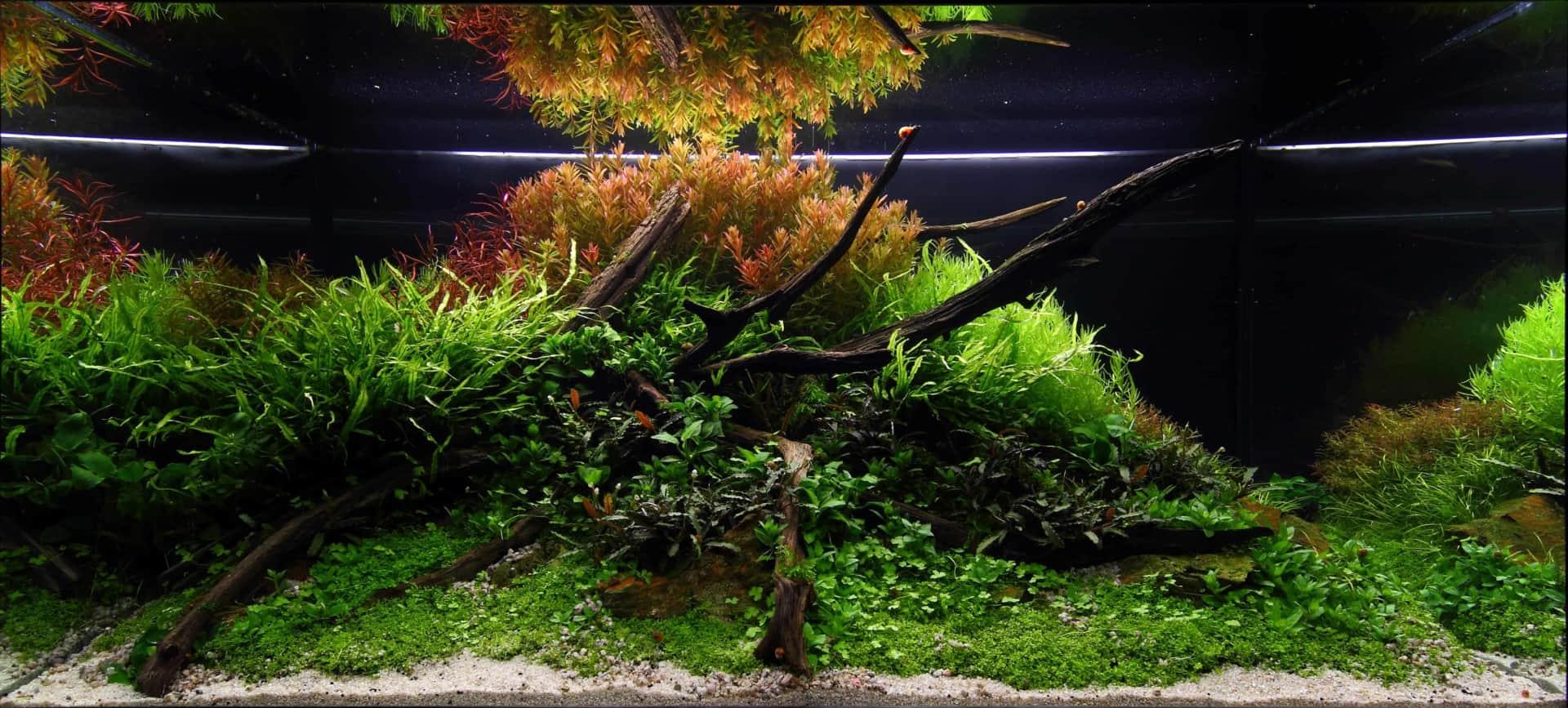191 - The Art of the Planted Aquarium - Neuheiten und Möglichkeiten zum Mitmachen im April 2019 (Stefanie Hesse) 40