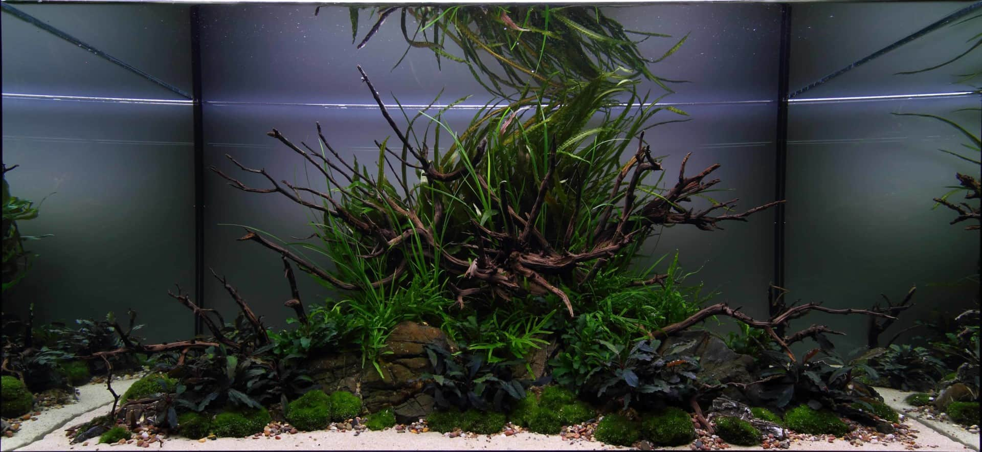 191 - The Art of the Planted Aquarium - Neuheiten und Möglichkeiten zum Mitmachen im April 2019 (Stefanie Hesse) 43