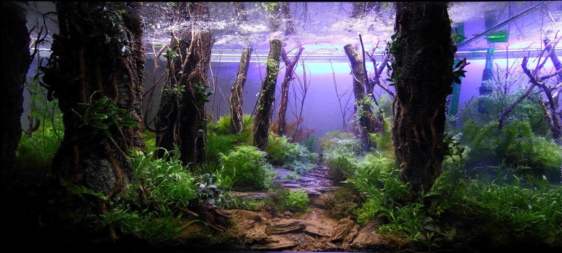 191 - The Art of the Planted Aquarium - Neuheiten und Möglichkeiten zum Mitmachen im April 2019 (Stefanie Hesse) 41