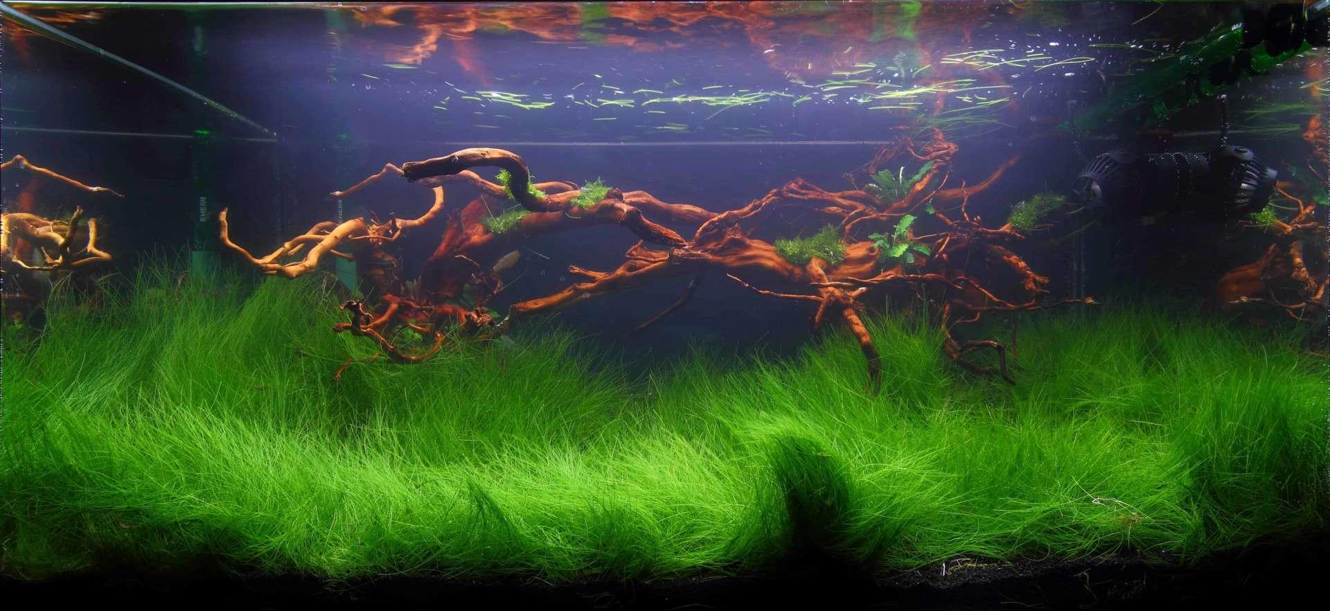 191 - The Art of the Planted Aquarium - Neuheiten und Möglichkeiten zum Mitmachen im April 2019 (Stefanie Hesse) 46