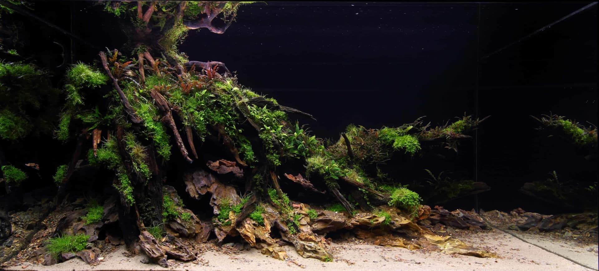 191 - The Art of the Planted Aquarium - Neuheiten und Möglichkeiten zum Mitmachen im April 2019 (Stefanie Hesse) 45