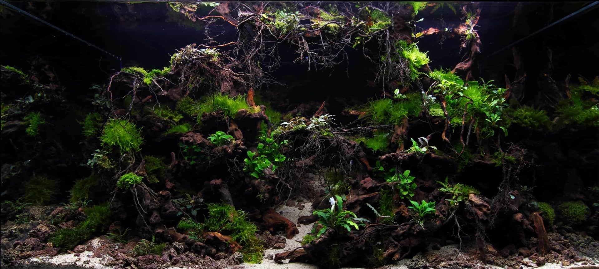 191 - The Art of the Planted Aquarium - Neuheiten und Möglichkeiten zum Mitmachen im April 2019 (Stefanie Hesse) 44