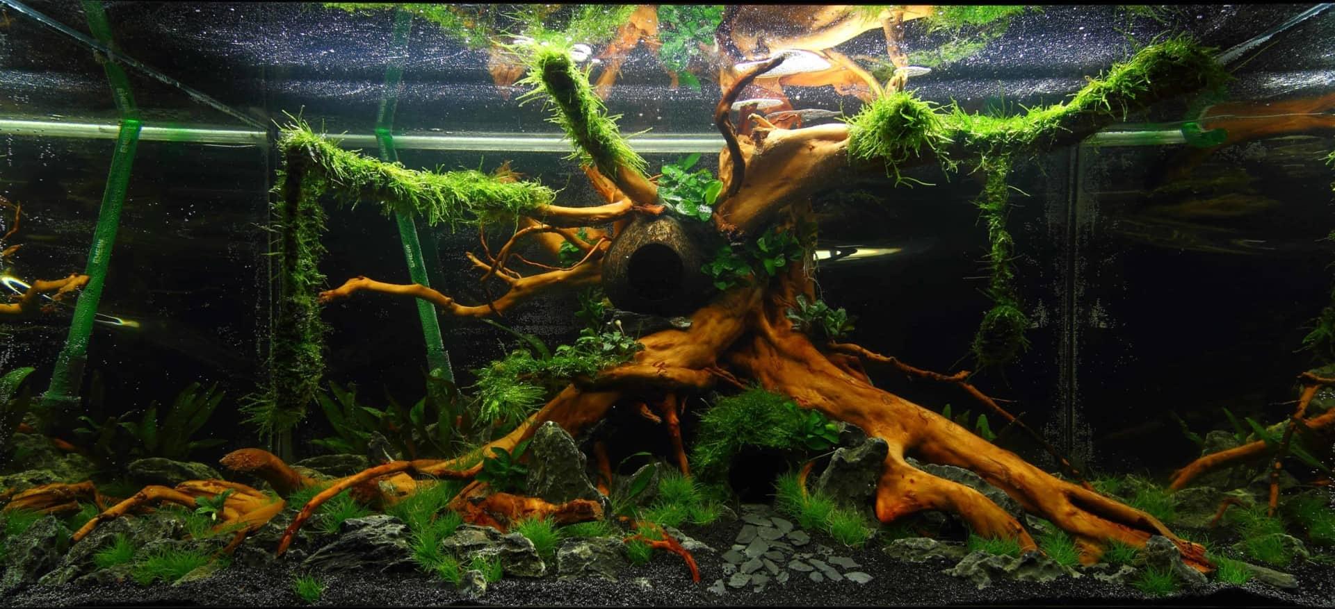 191 - The Art of the Planted Aquarium - Neuheiten und Möglichkeiten zum Mitmachen im April 2019 (Stefanie Hesse) 49
