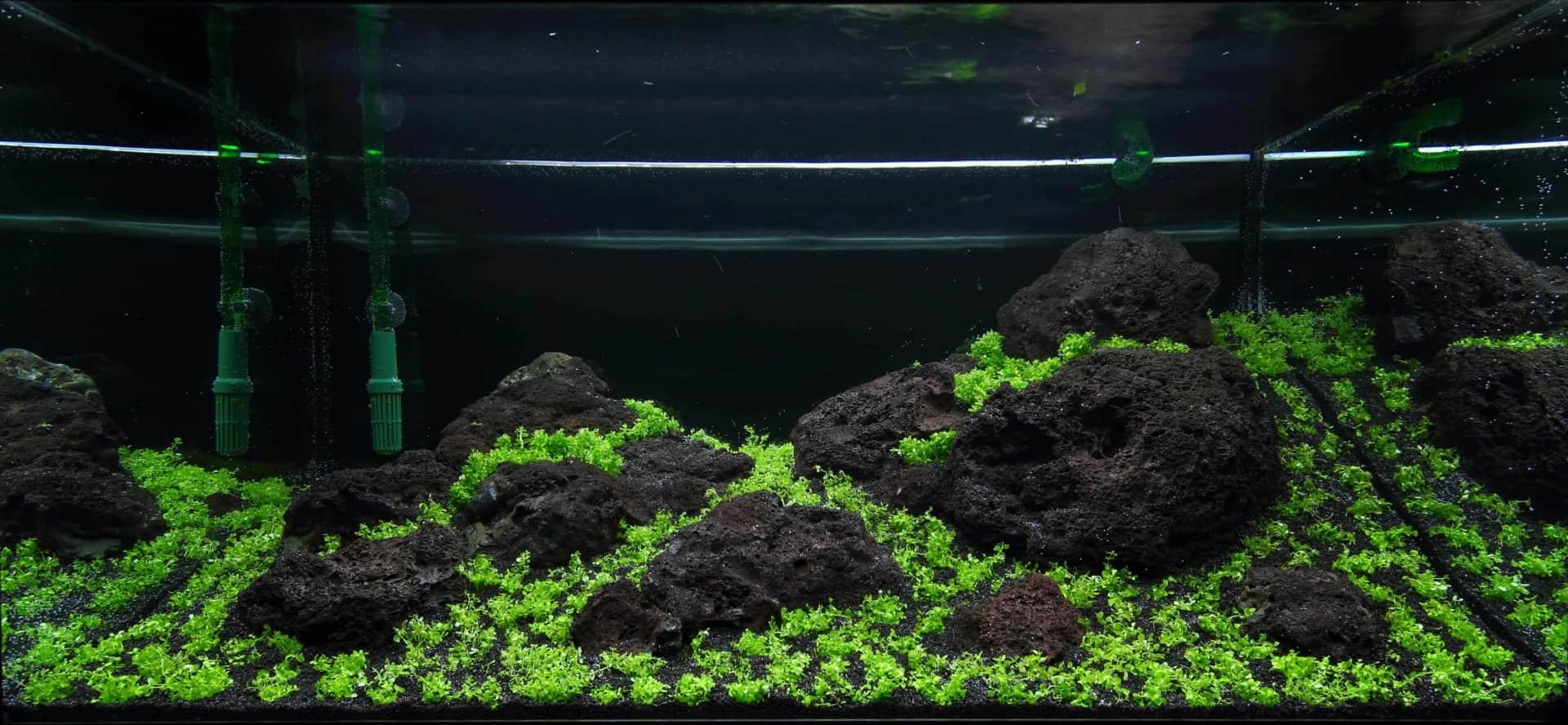 191 - The Art of the Planted Aquarium - Neuheiten und Möglichkeiten zum Mitmachen im April 2019 (Stefanie Hesse) 48