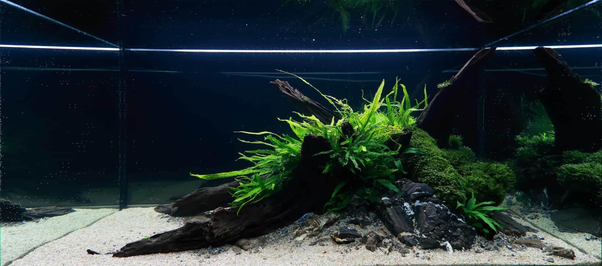 191 - The Art of the Planted Aquarium - Neuheiten und Möglichkeiten zum Mitmachen im April 2019 (Stefanie Hesse) 5