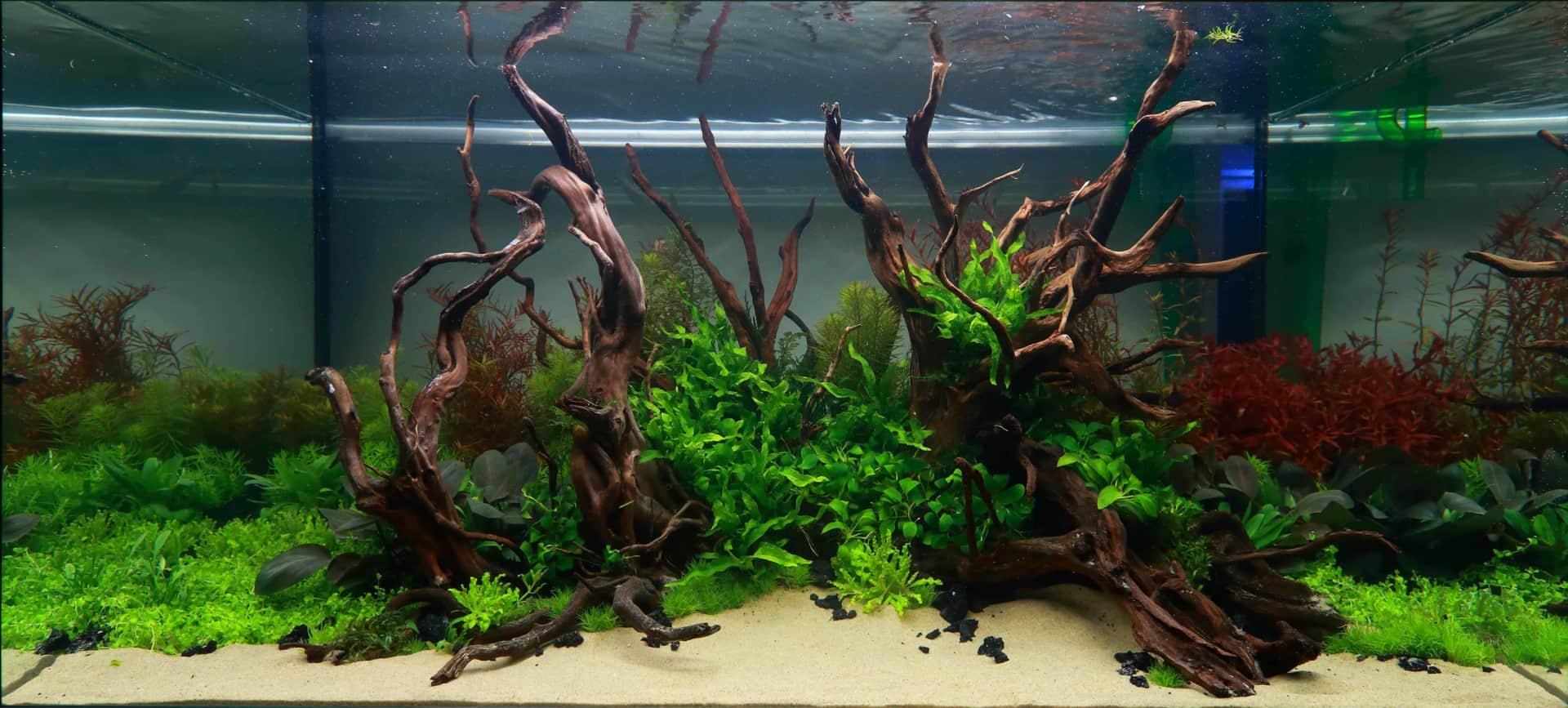 191 - The Art of the Planted Aquarium - Neuheiten und Möglichkeiten zum Mitmachen im April 2019 (Stefanie Hesse) 8