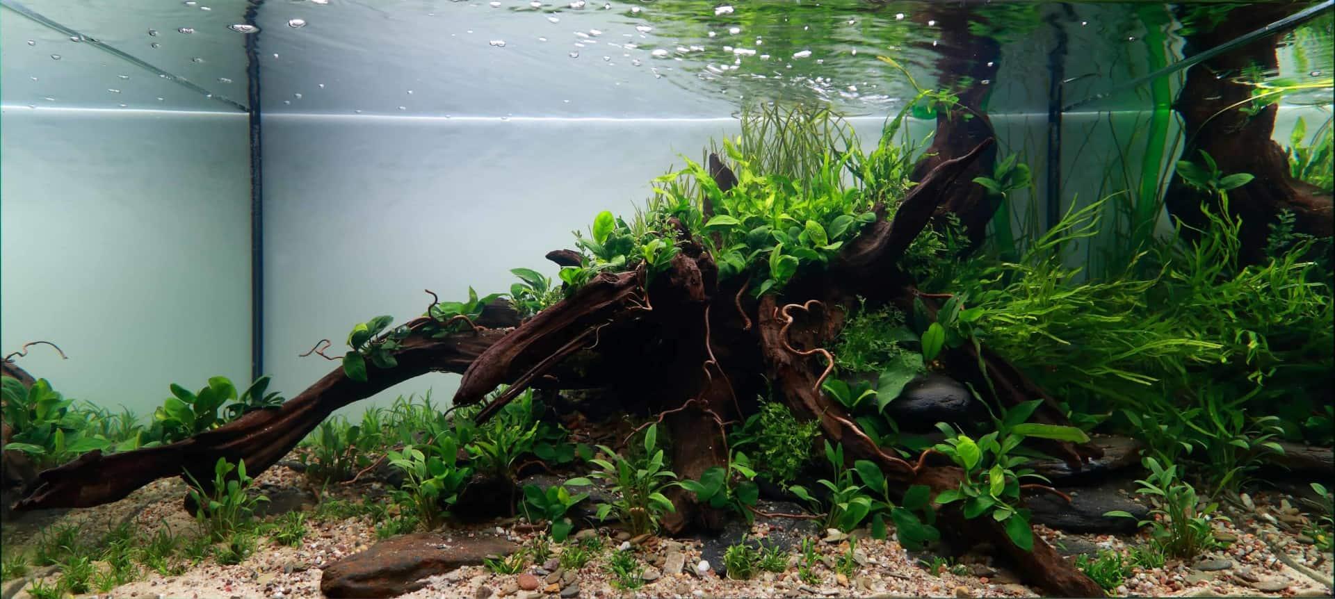 191 - The Art of the Planted Aquarium - Neuheiten und Möglichkeiten zum Mitmachen im April 2019 (Stefanie Hesse) 11