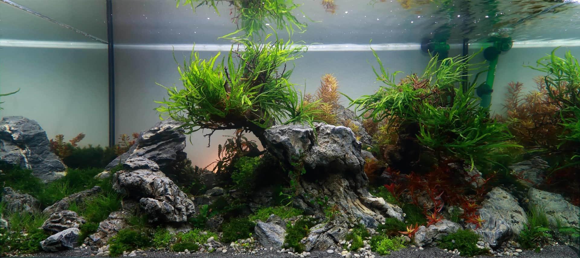 191 - The Art of the Planted Aquarium - Neuheiten und Möglichkeiten zum Mitmachen im April 2019 (Stefanie Hesse) 3